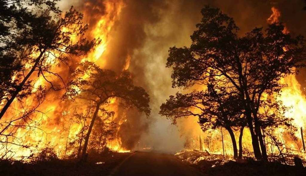 wildfire-image-home-section-1-001