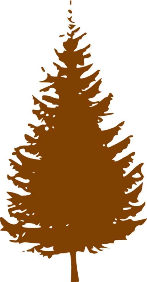 2015 brown pine tree - Christmas Tree Removal
